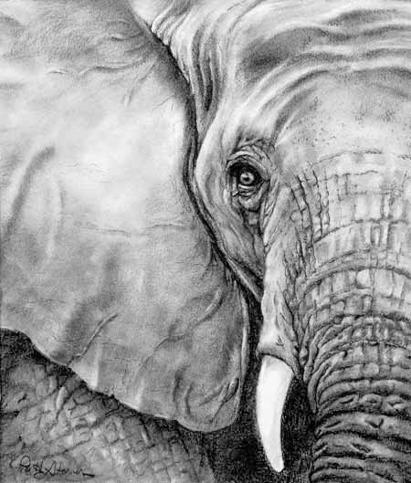 Patty Storms Pencil Drawings Black And White