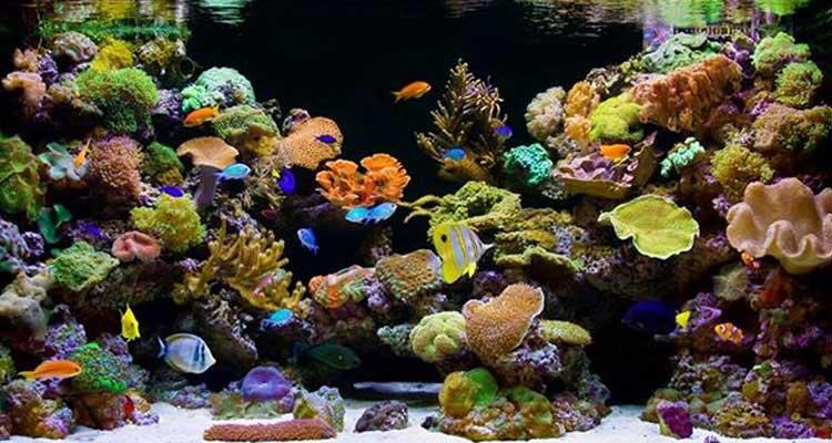 Cheap Saltwater Fish : Reef Fish, Marine Fish, Coral, Aquarium Supplies & more ...