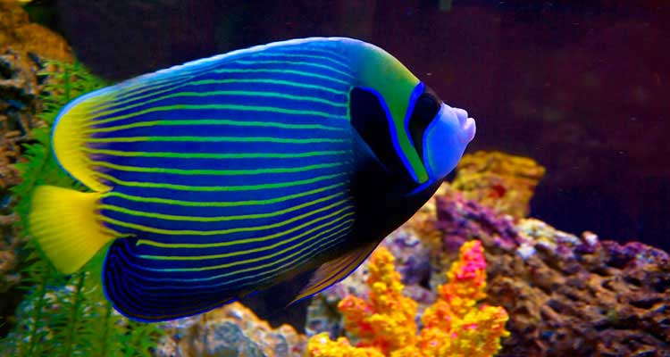 Reef Fish, Marine Fish, Coral, Aquarium Supplies & more ...