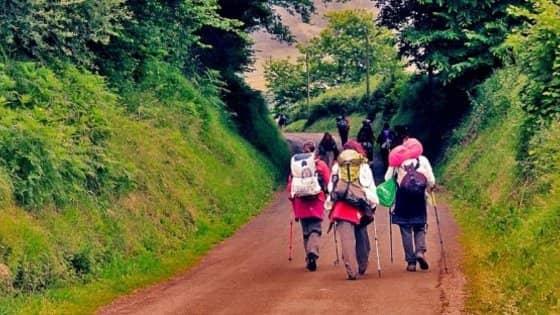 Camino de santiago 5899 p