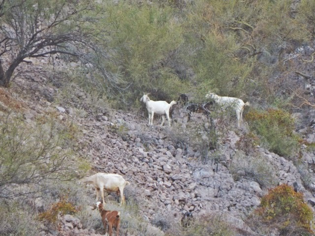 Little goats with bells cruise the hillsides at night. It's fun to hear their little bells jingle