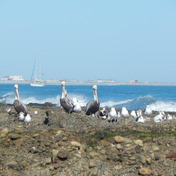 Terrapin anchored at Abreojos