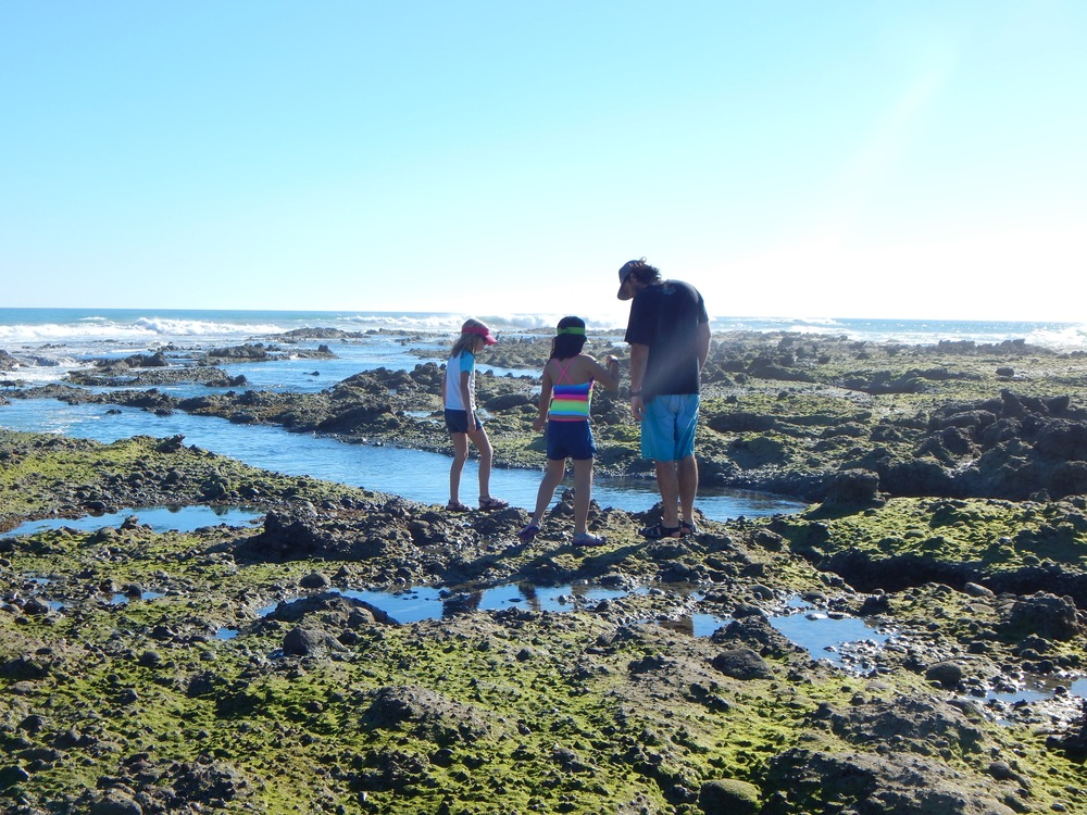Awesome tide pools at Punta Abreojos