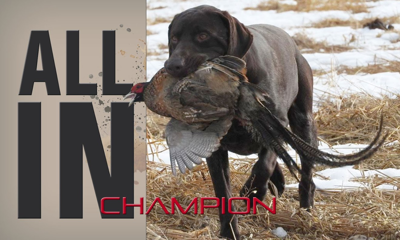 Champion Sporting Dogs, Breeding quality hunting dogs
