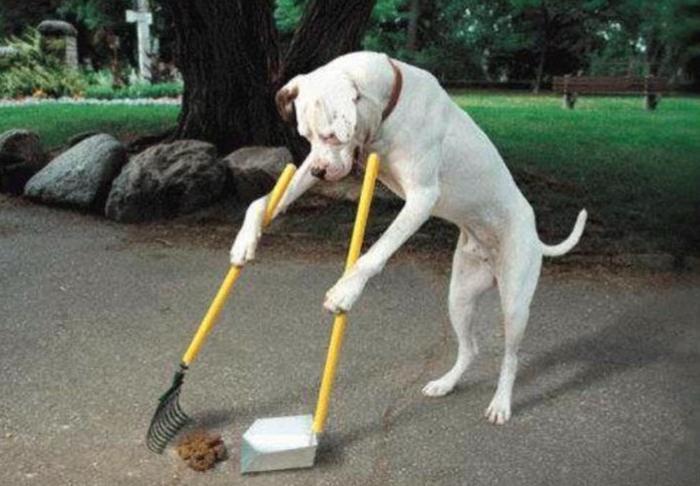 Dog poop1