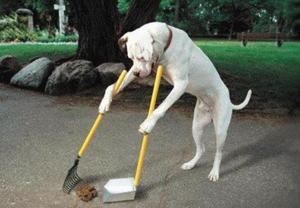 Social dog poop1