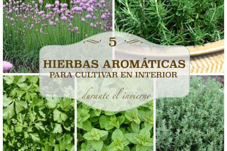 5 hierbas arom ticas para cultivar en interior pot store - Plantas aromaticas interior ...