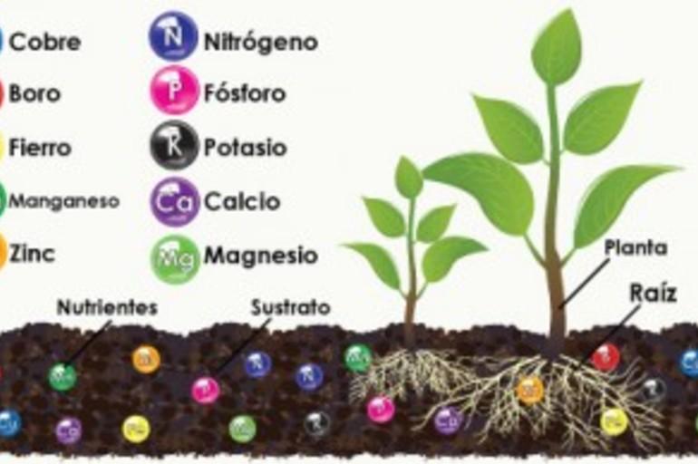 elementos del suelo esenciales para las plantas pot store