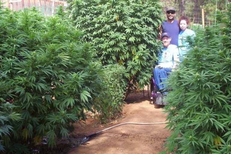 c mo preparar el suelo para un jard n con marihuana en