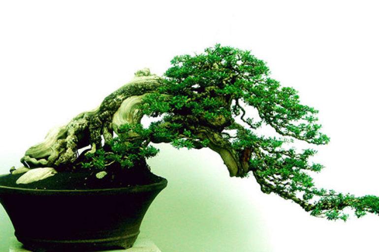 Cultivo de bons i por semilla pot store - Cultivo de bonsai ...