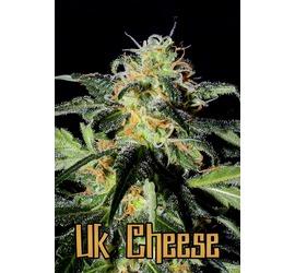 UK Cheese (x2)
