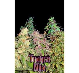 Trance Mix Auto (x10)