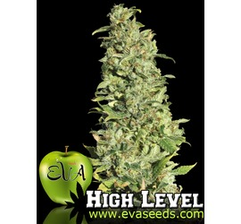 High Level (x3)+1