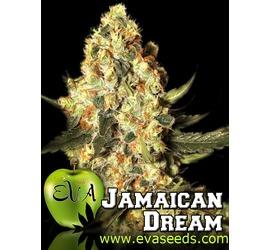Jamaican Dream (x3)