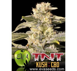 TNT Kush CBD (x3)