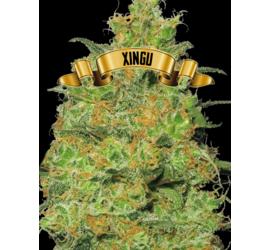 Xingu (x1)