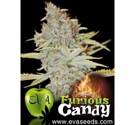 Furious Candy (x3)
