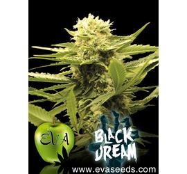 Black Dream (x3)