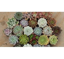 Cactus y Suculentas Pequeñas