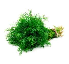 Hinojo planta