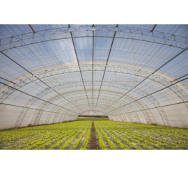 Film Plástico Invernadero 2T 6mt 150µm
