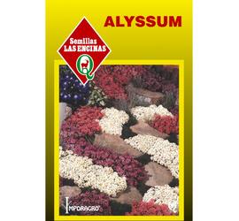 Alyssum Colores Variados