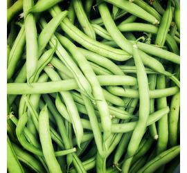 Semilla Poroto Verde Magnum