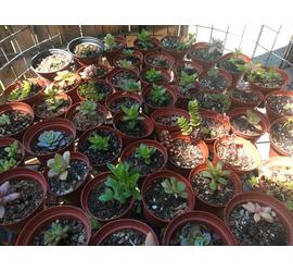 Cactus y Suculenta xs