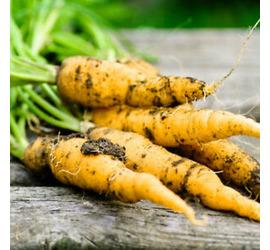 Zanahoria Lobbericher 4grs