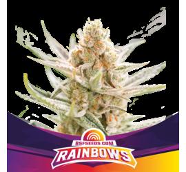 Rainbows (x2)