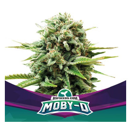 Moby-D (x2)