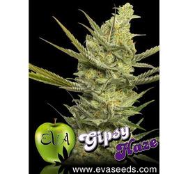Gipsy Haze (x3)