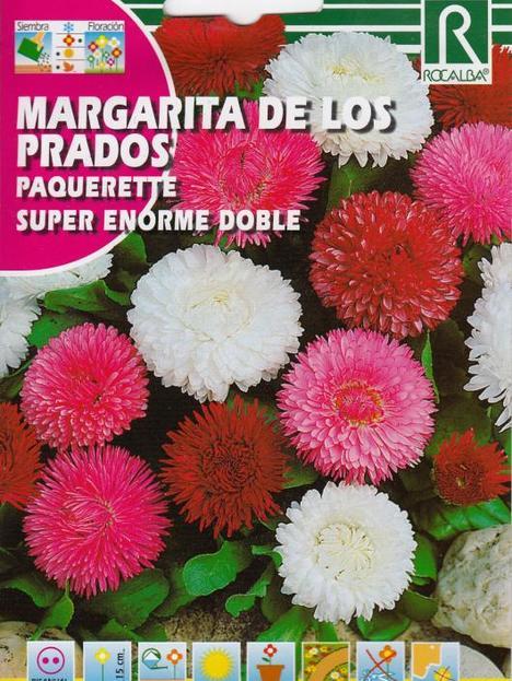 Semilla Margarita de los Prados