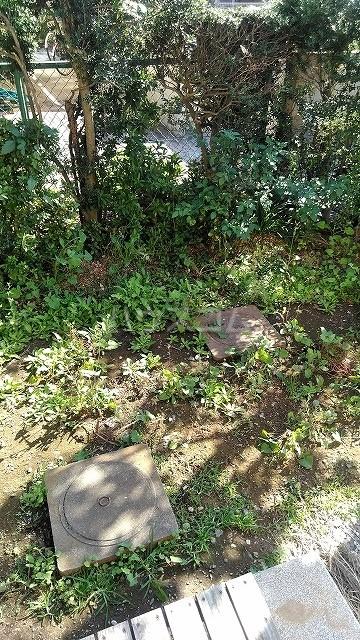 ドミール・ヤマノウチの庭