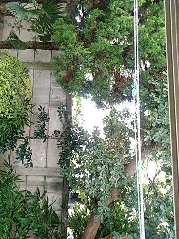 メゾン・ド・ワイズ 102号室のバルコニー