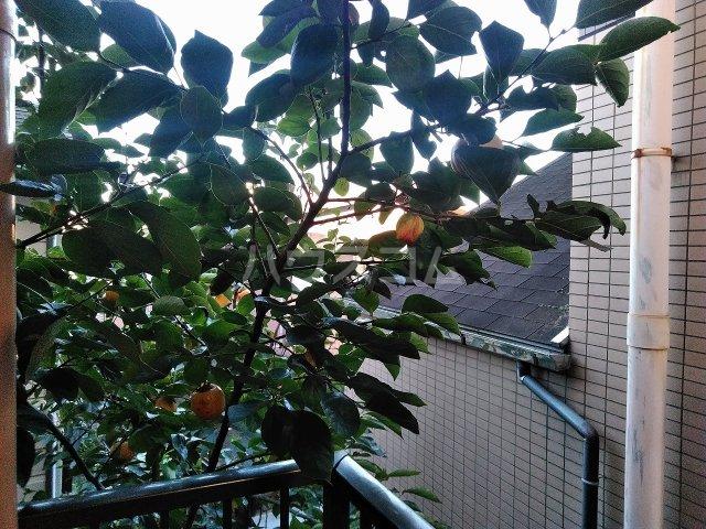 アーバンハイツ大岡山 201号室の景色