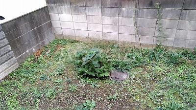 上木崎4丁目戸建の庭