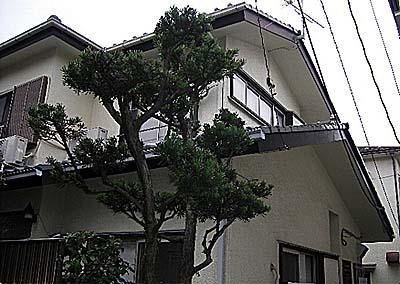 コーポ福沢外観写真