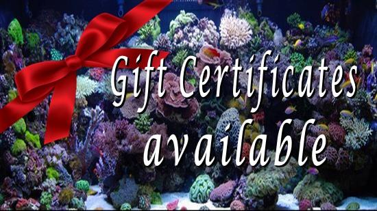 https://commondatastorage.googleapis.com/swf_product_images/11_gift-certificate_3408d20473.jpg?r=1544145676