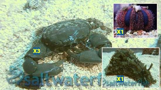 https://commondatastorage.googleapis.com/swf_product_images/14840_algae-destroyer-pack_552f36065a.jpg