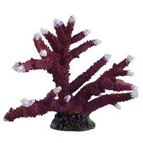 Underwater Treasures Staghorn - White Tip