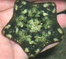 Pillow Cushion Starfish