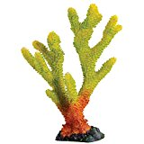 Underwater Treasures Staghorn - Multi-Color