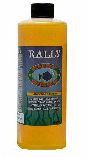 Ruby Reef Rally - 64 oz
