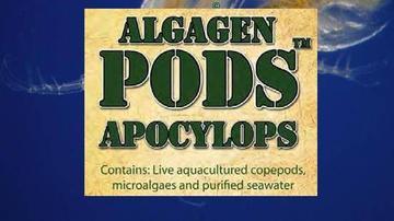 AlgaGen ReefPODS Apocyclops