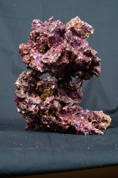 Real Reef Rock; Large - 55 lbs - Free Shipping