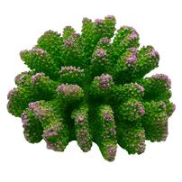 Underwater Treasures Polyped Coral - Green