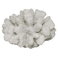 Underwater Treasures Polyped Coral - White