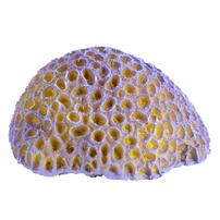 Underwater Treasures Purple Brain Coral