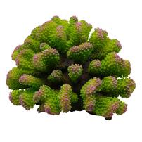 Underwater Treasures Toadstool Coral - Envy